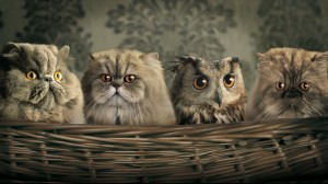 owl & cat blended